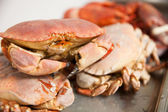 Hot Steamed Crabs — Stock Photo