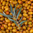 Stock Photo: Buckthorn. Texture.