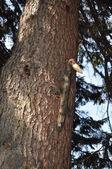 Wooden woodpecker on a tree. — Stock Photo