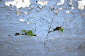 Old peeling wall. — Stock Photo