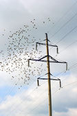 Electric pole and a flock of birds. — 图库照片