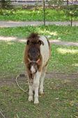 Malej pony. — Stock fotografie