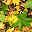 Background of fallen leaves. — Stock Photo