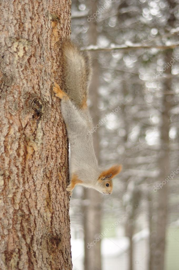 Squirrel on a tree trunk. — Stock Photo #14721055