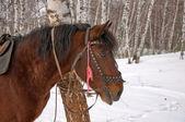 Saddled horse. — Stock Photo