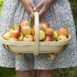 Woman with fresh apples in a wooden trug — Stock Photo