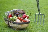Freshly harvested vegetables — Stock Photo