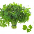 Bunch of flat leaf parsley isolated on a white background — Stock Photo #14004495