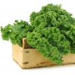 Freshly harvested kale cabbage in a wooden crate — Stock Photo #13342559