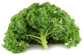 Freshly harvested whole kale cabbage — Stock Photo