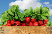 Bunch of fresh radishes in a wooden crate — Stock Photo