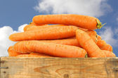 Bunch of fresh winter carrots in a wooden crate — Stock Photo