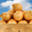 Brown onions in a wooden crate - Stock Photo