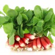 Bundles of fresh red and white radishes - Stock Photo