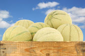 Cantaloupe melons in a wooden crate — Stock Photo