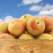 Fresh pluots (Prunus salicina - armeniaca) in a wooden crate — Stock Photo