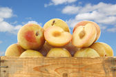 Fresh pluots (Prunus salicina - armeniaca) and a cut one in a wooden crate — Stock Photo