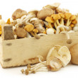 Mixed freshly harvested mushrooms in a wooden crate — Stock Photo