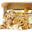 Mixed freshly harvested mushrooms in wooden crate — Stock Photo #33134527