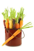Fresh colorful mix of red,orange and yellow carrots with some foliage in an enamel cooking pot — Stock Photo