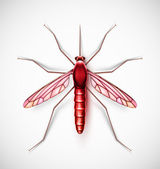 One isolated mosquito, eps 10 — Stock Vector