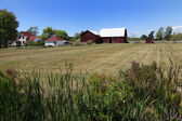 Farm on the sommer day — Stock Photo