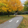 Fall Park Path - Stock Photo