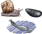 Vector illustration of the animals of the species of mollusks. — Stock Vector