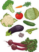 Vegetables I — Stock Vector