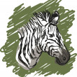 Zebra sketch drawing - Stock Vector