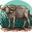 African buffalo — Stock Vector