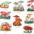 Poisonous mushrooms — 图库矢量图片