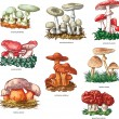 Poisonous mushrooms — Stockvectorbeeld