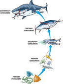 Marine food chain — Stock Vector