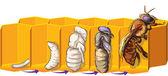 ミツバチ — ストックベクタ