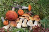 Grupa grzybów jadalnych — Zdjęcie stockowe