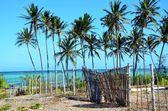 Palm trees and old fence, Zanzibar — Stock Photo