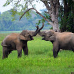Elephants in love, Srí Lanka — Stock Photo #26161221