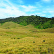 Landscape of National Park Horton Plains, Sri Lanka — Stock Photo