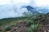 View of the active volcano Yzalco — Stock Photo