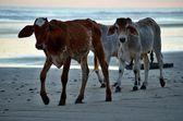 Playa El Espino, El Salvador — Foto de Stock