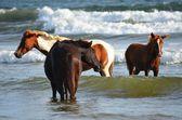 Playa El Espino, El Salvador — Stock Photo