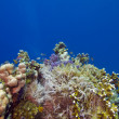 Coral reef on the bottom of red sea — Stockfoto