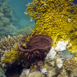 Coral reef with fire coral and sea sponge on the bottom of red sea — Stock Photo