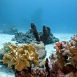 Coral reef with soft and hard corals and sea sponge on the bottom of red sea — Stock Photo