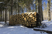 Heap of pieces of wood in forest in winter in polish forest — Stock Photo