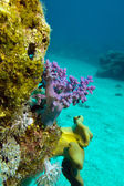 Coral reef with soft corals on the bottom of red sea — Stock Photo