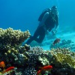 Scuba diver above coral reef in tropical sea — Stock Photo #18685401