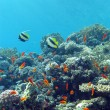 Coral reef with hard and fire coral and exotic fishes at the bottom of tropical sea - Stock Photo