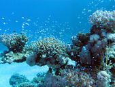 Coral reef with hard corals and exotic fishes at the bottom of tropical sea — Stock Photo